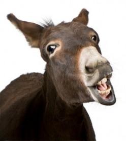 donkey-250x279