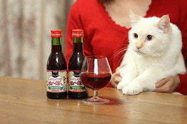 A cat eyes a glass of Nyan Nyan Nouveau, recently released in Japan especially for cats.