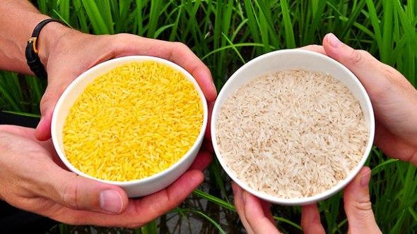 While Golden Rice was developed over ten years at the miniscule total cost of $2.6 million, in an extraordinary public-private partnership using funds donated by the Rockefeller Foundation, the Swiss Federation, the National Science Foundation, and the European Union, Greenpeace International alone annually spends about $270 million annually, and upwards of $7 million each year specifically dedicated to burying Golden Rice and any other food or crop developed using biotechnology.