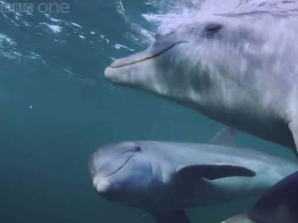 dolphins-bbc-youtube