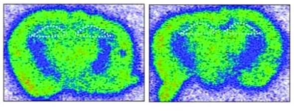 Image Credit: Cell, Gräff et al.