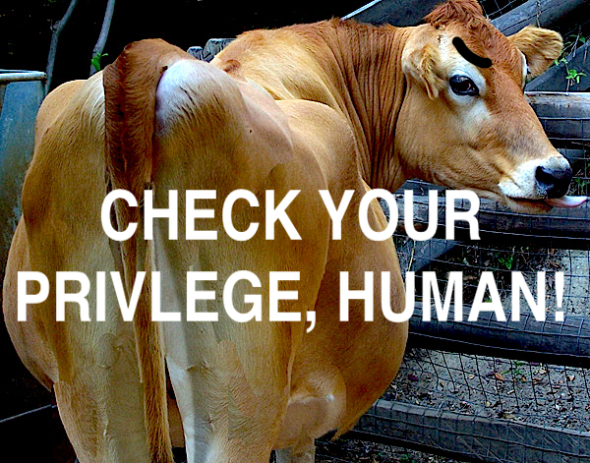 cow-sex-check-your-privlege