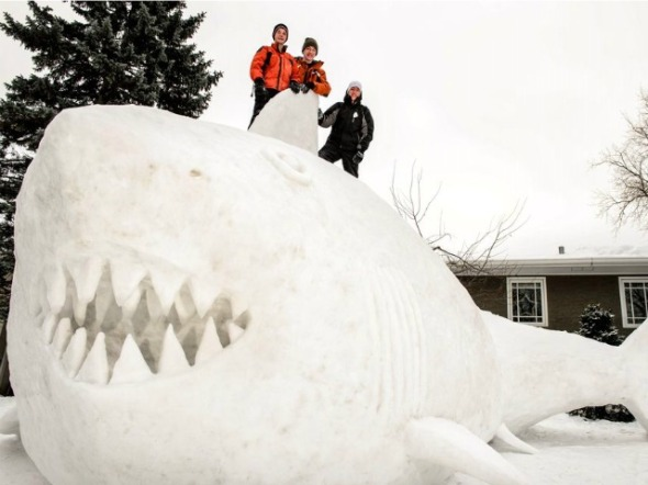 snow-shark-ap