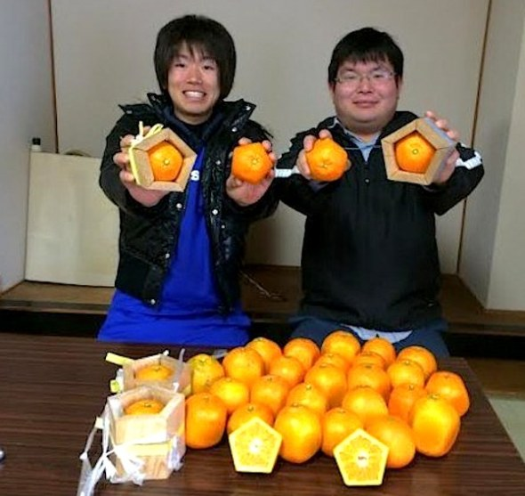 Pentagon oranges and their happy inventors.