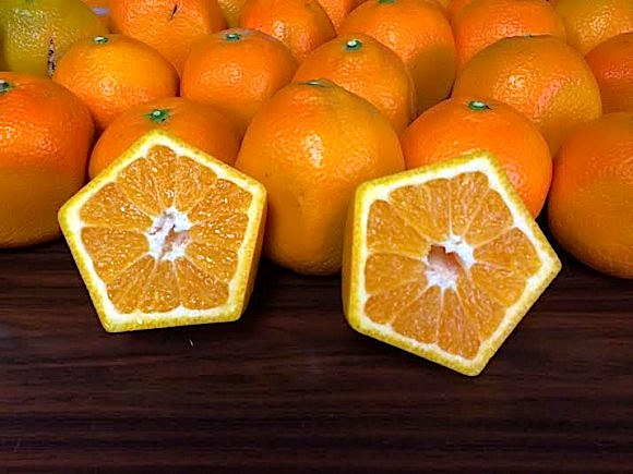 ensure-your-fruit-never-rolls-away-with-pentagon-oranges2
