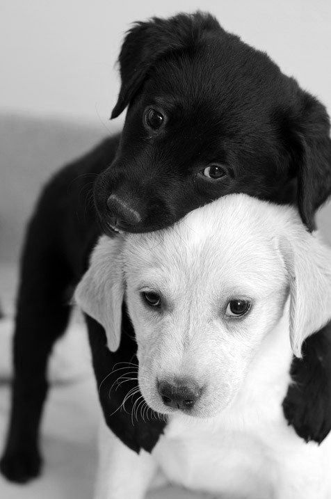 Super-cute-puppies-BW
