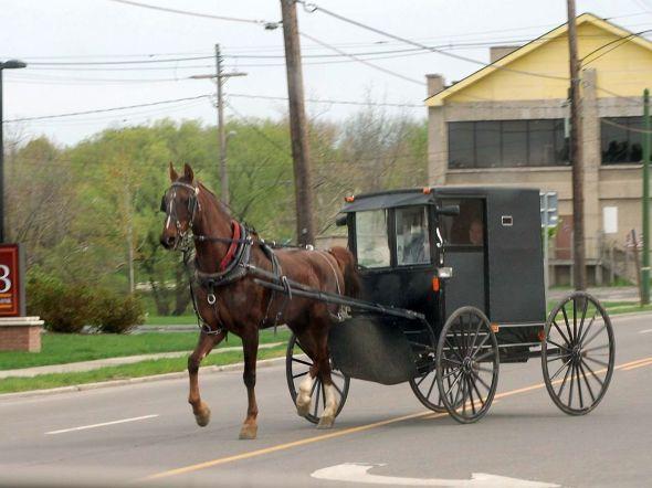 amish-buggy-in-penn-yansmall
