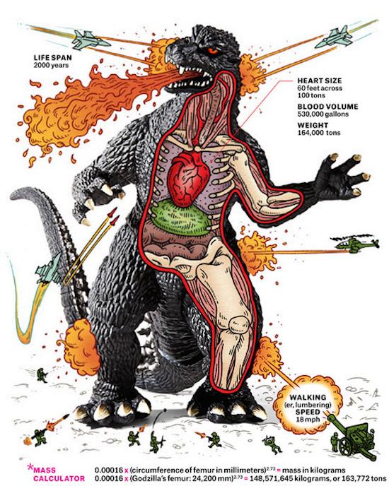 gozilla-anatomy