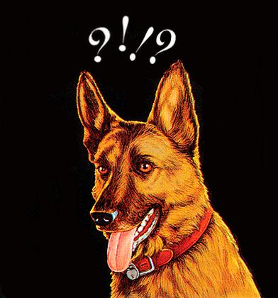 question-dog