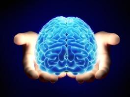 WOD-Neuroscience