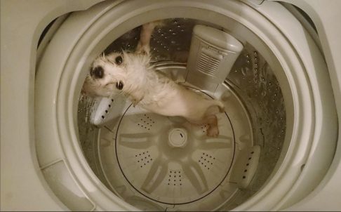 Facebook post of the dog in the washer. Photo: SCMP