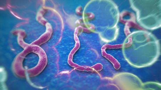 ebola_virus_imaging_wide