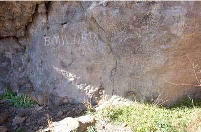 Wild tobacco found growing beneath rock art at Dripping Springs, with triangle motifs visible at right. (Courtesy L. Loendorf)