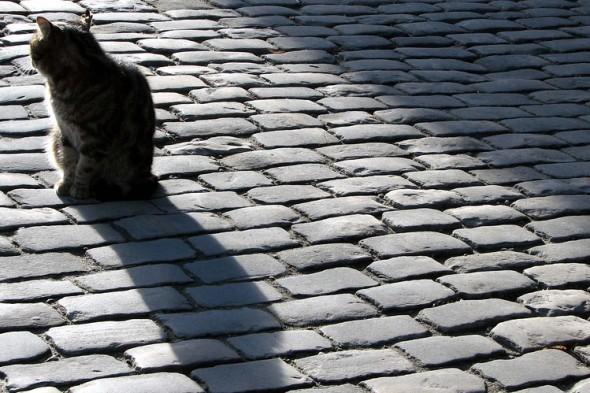 cat-getty
