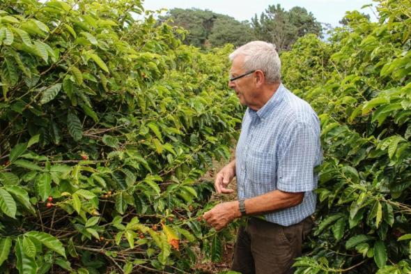 Bill Bolton, 74, a pensioner from Britain who has lived in Saint Helena since 1991, walks in his coffee plantation in Jamestown on March 14, 2015 (AFP Photo/Jean Liou)