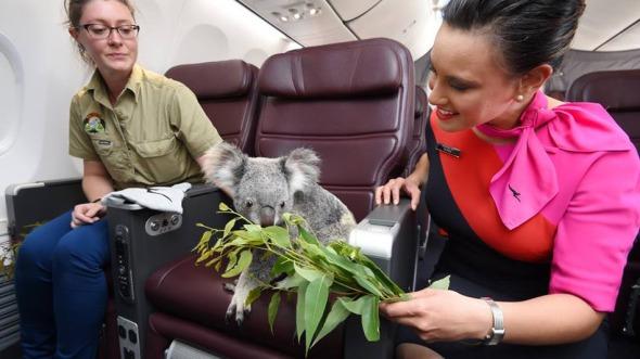 koala3
