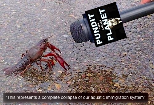 Lobster-aquatic-immigration