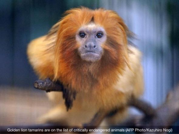 monkeys-stolen