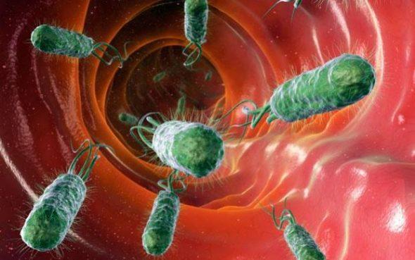 Bacterial-diarrhoe_1899705i-large_trans++4d0Vs6-dQkYv8FTFVrAejHvIeVciscqpgTohskaiaXk