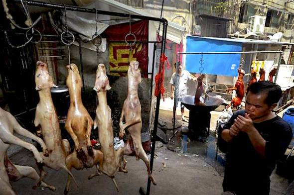 A man lights a cigarette as dogs roast at a restaurant in Yulin in south China's Guangxi Zhuang Autonomous Region. Animal rights activists are seeking to shut down an annual summer dog meat festival in southern China, which they call extreme cruelty to canines. AP