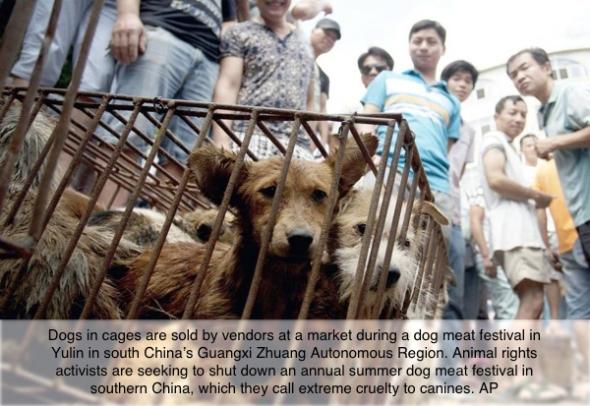 China-Eating-Dog