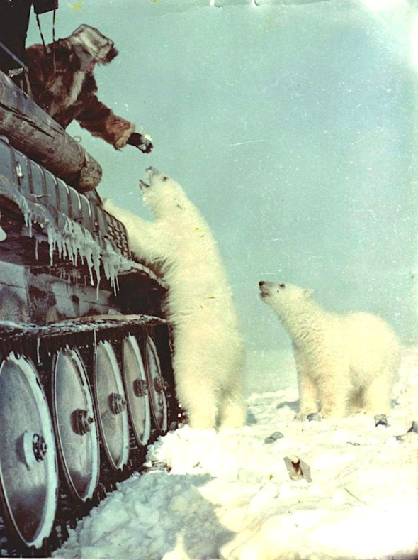 feeding-polar-bears-from-a-tank-1950-1