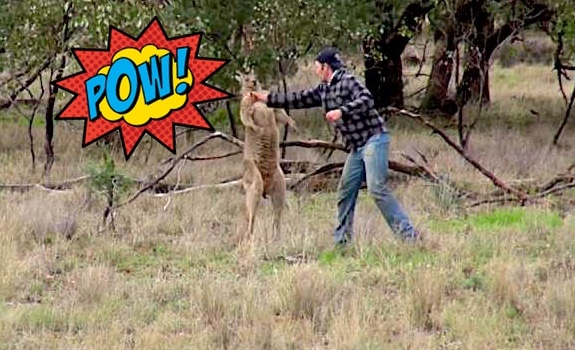 man-punches-kangaroo-pow