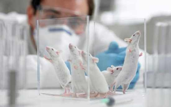 mice-lab