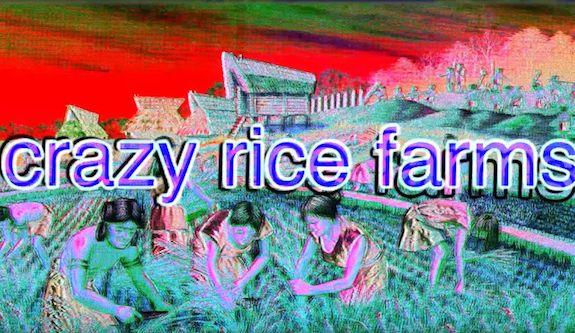 rice-farms-japan
